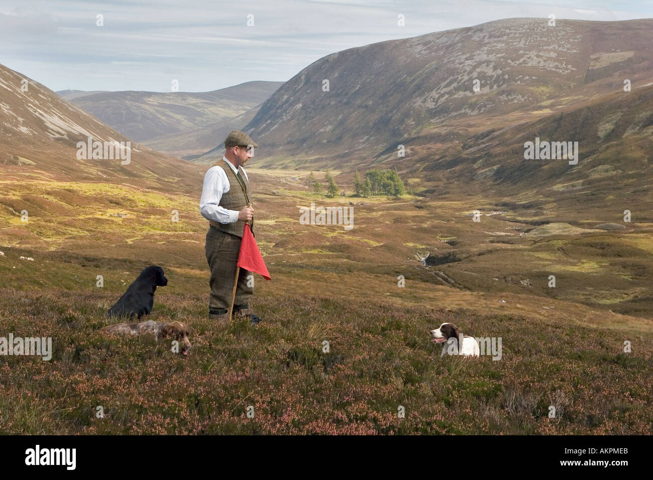 Gamekeeper with two dogs on heather moorland at Inverey,  Braemar, Cairngorm National Park Scotland, UK - Stock Image