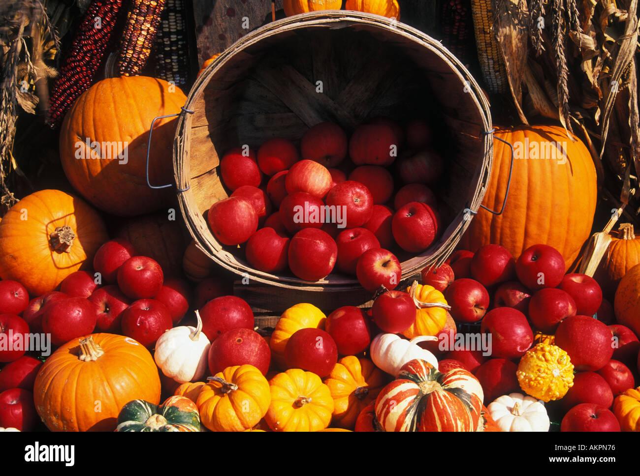 Autumn Harvest Apples Pumpkins Squash Indian Corn New Albany Indiana Basket Cornucopia - Stock Image