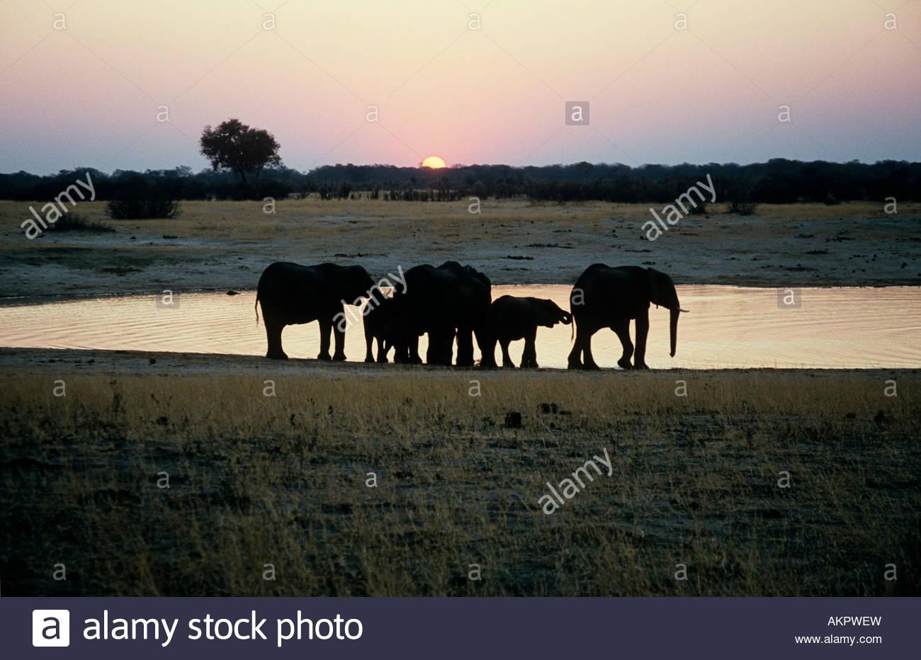 Elephant family at sunset - Stock Image