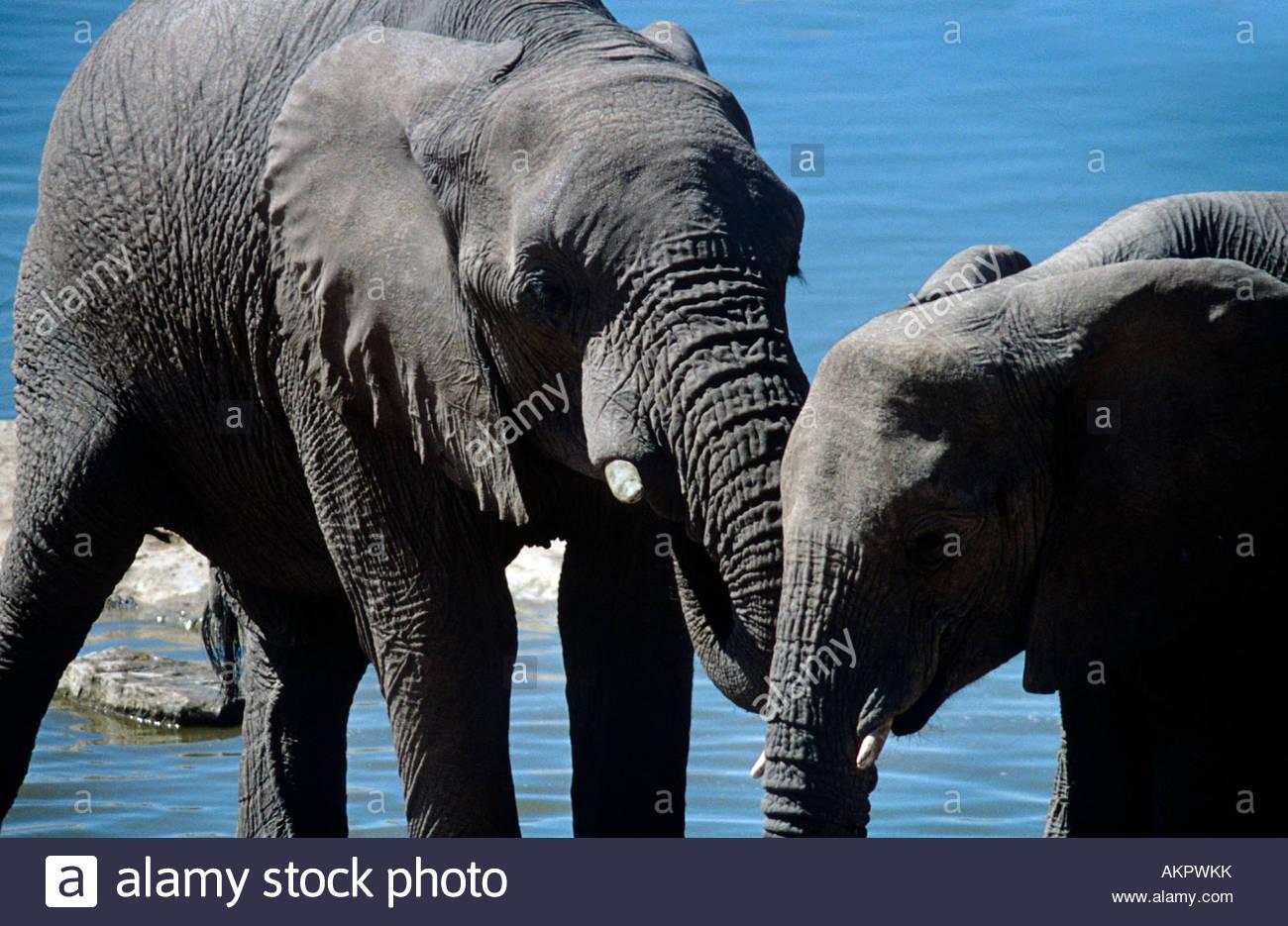 Elephant and calf - Stock Image