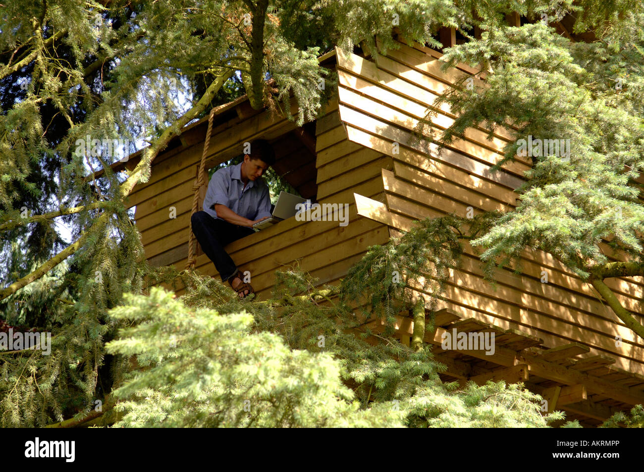 A man working from a tree house with his laptop - Stock Image