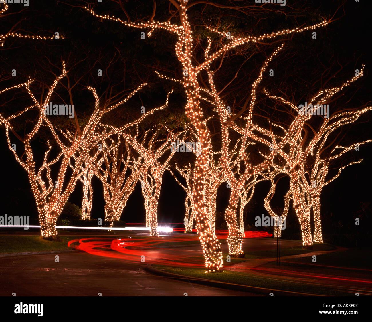 Driveway with Christmas lights on trees Stock Photo: 4917767 - Alamy