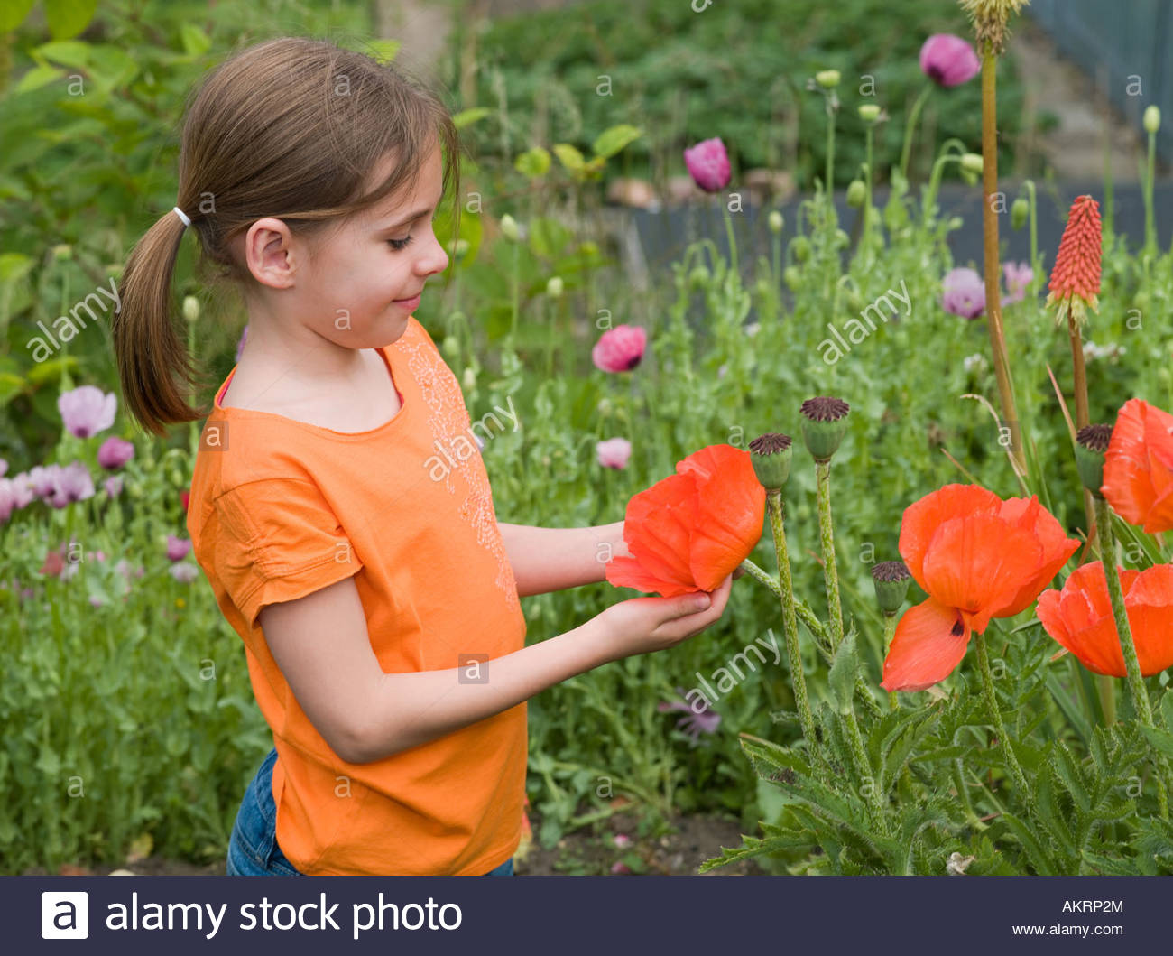 A girl holding a poppy - Stock Image