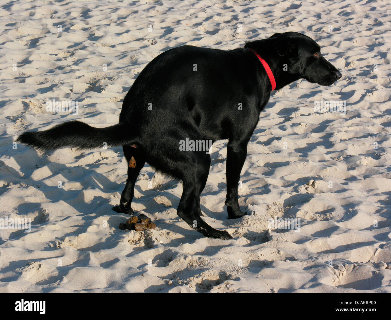 Dog Shit On The Beach
