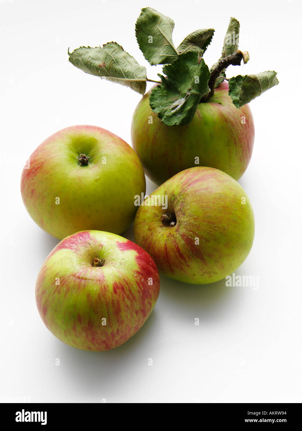 Bramley Apples on a white background - Stock Image
