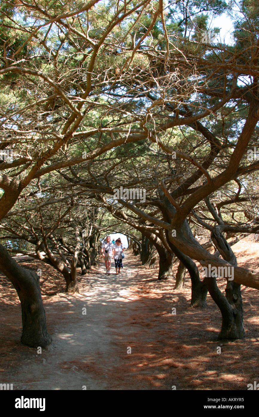 The wonderful three-lined path in the Filerimos acropolis, Rhodes Island - Stock Image