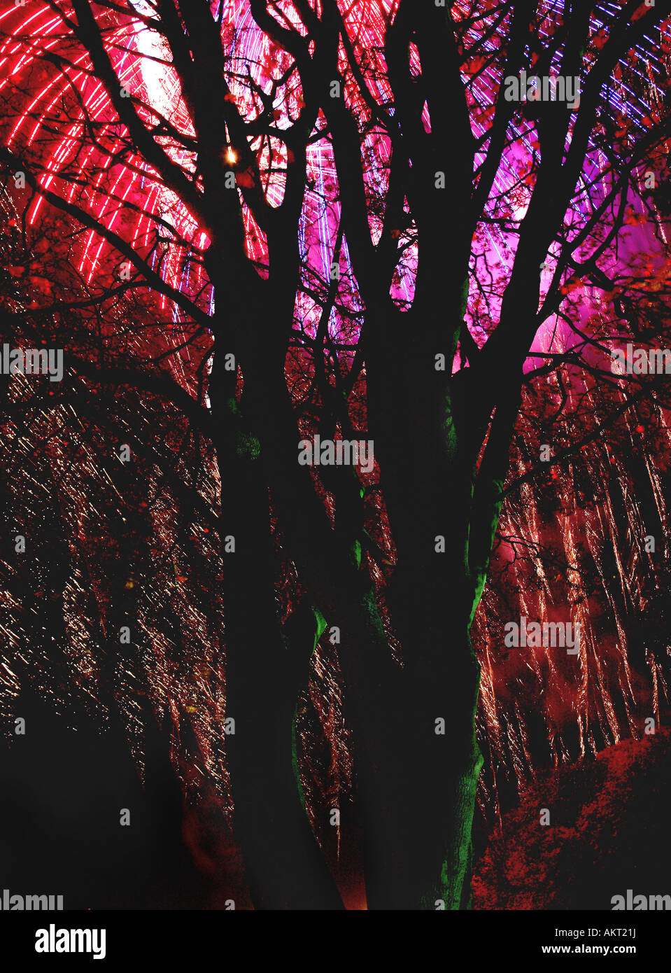 Fireworks Dundee Lochee park fireworks looking through trees - Stock Image