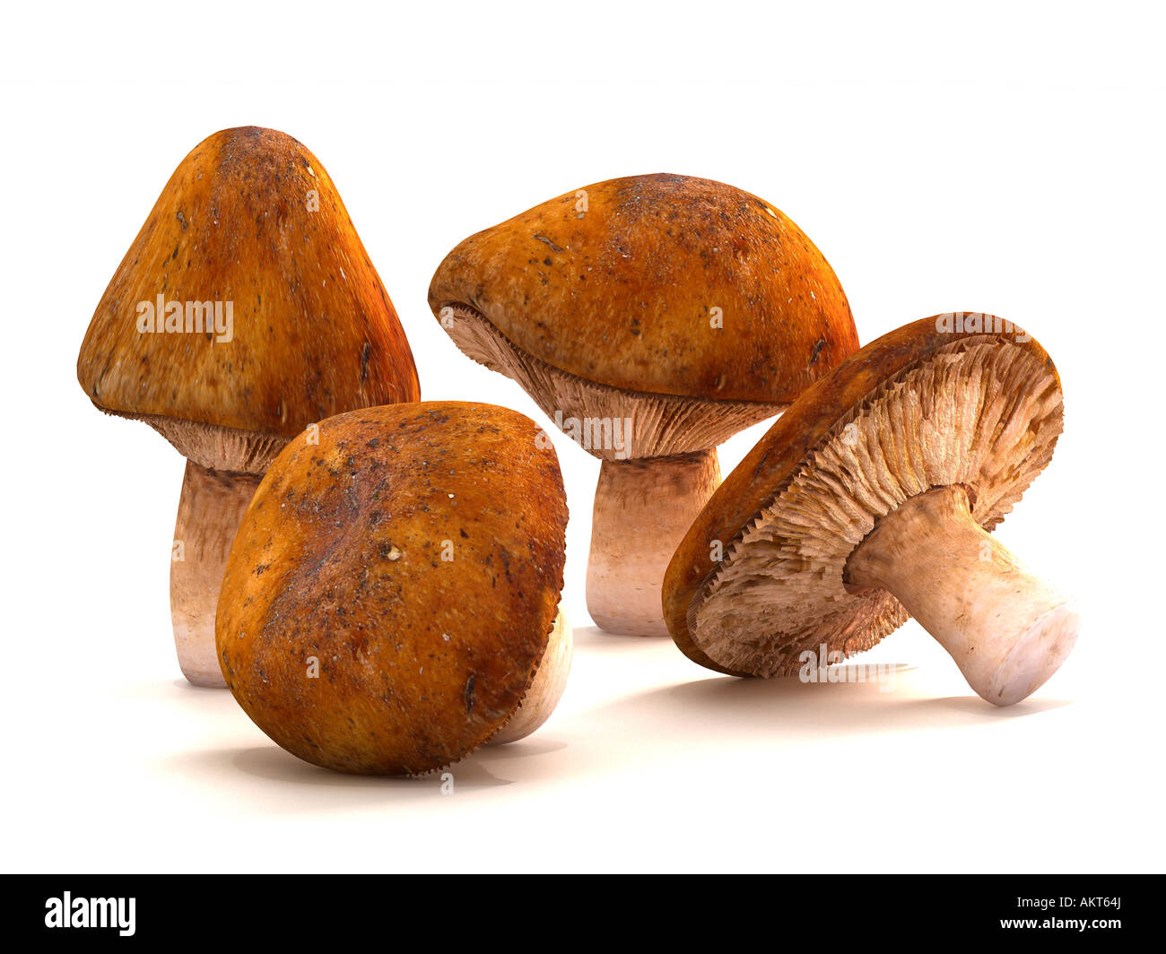 Four classic mushrooms shaped by natures glorious art. Scattered against a white background for easy isolation. - Stock Image