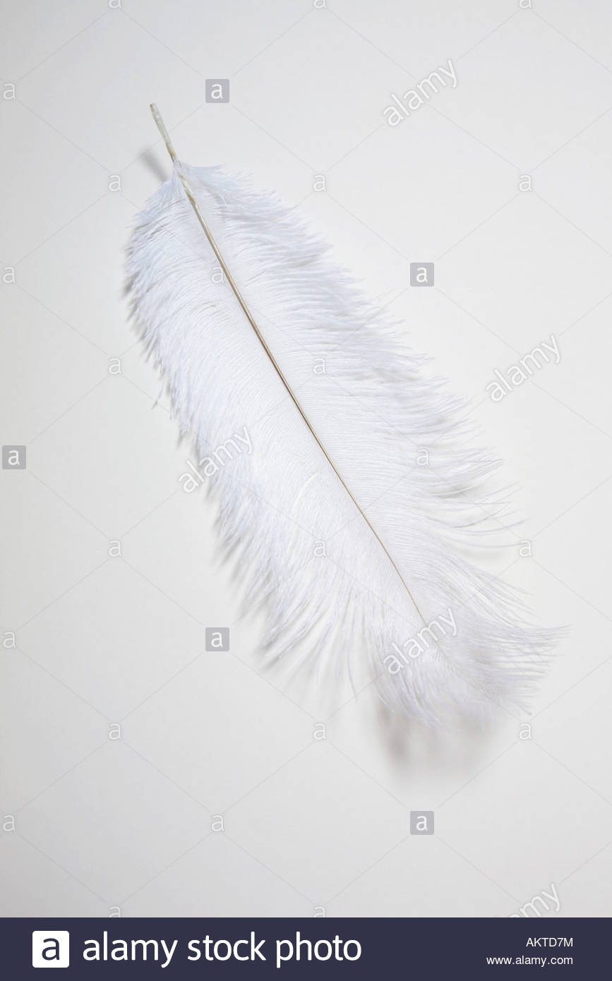 White feather - Stock Image