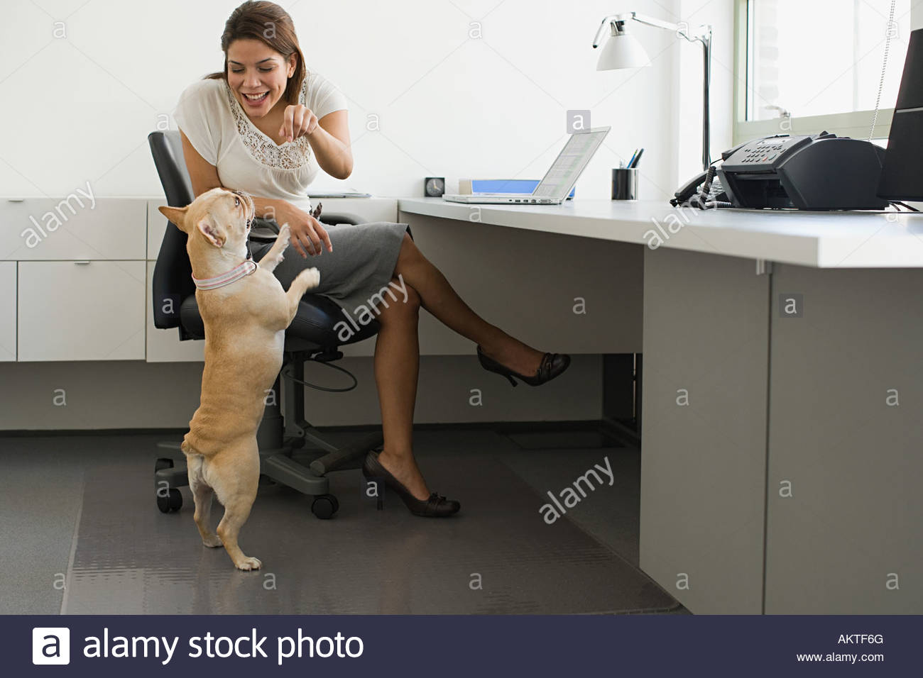 Woman with a french bulldog - Stock Image