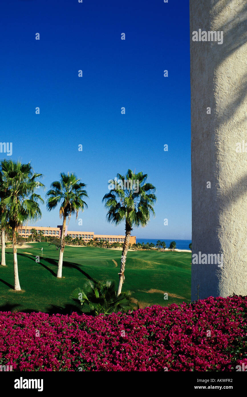 Mexico, Cabo San Lucas, Palms and flowers Stock Photo