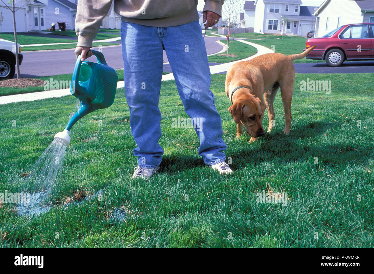 Man repairing grass in his lawn in a suburb - Stock Image
