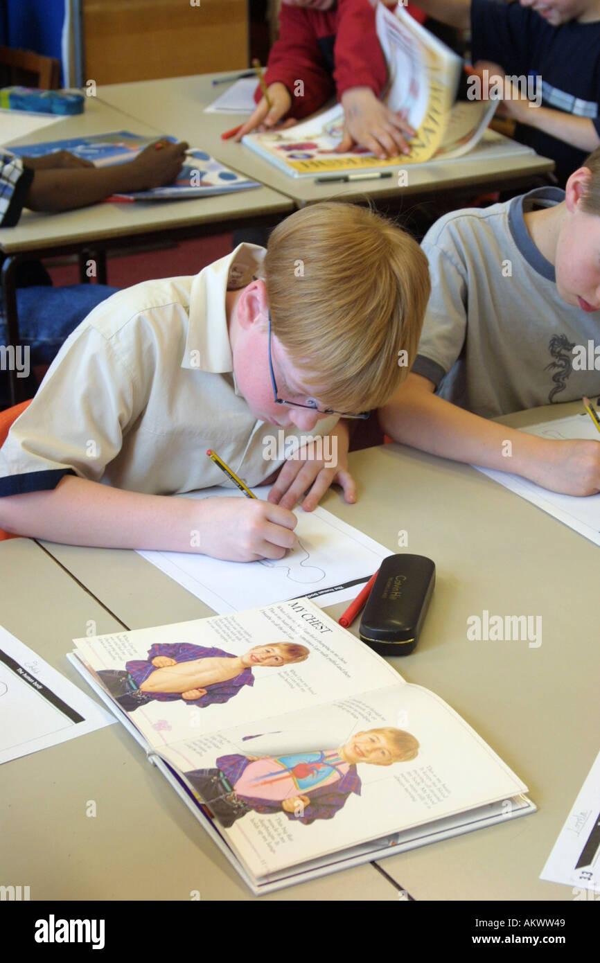 primary school boy studying anatomy in classroom Stock Photo ...