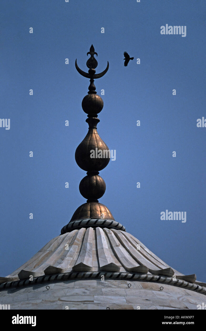 Detail of the top of the Taj Mahal with encircling bird Agra India - Stock Image