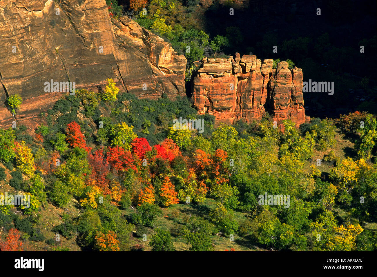 Fall colors viewed from atop Angel's Landing in Zion National Park Utah - Stock Image