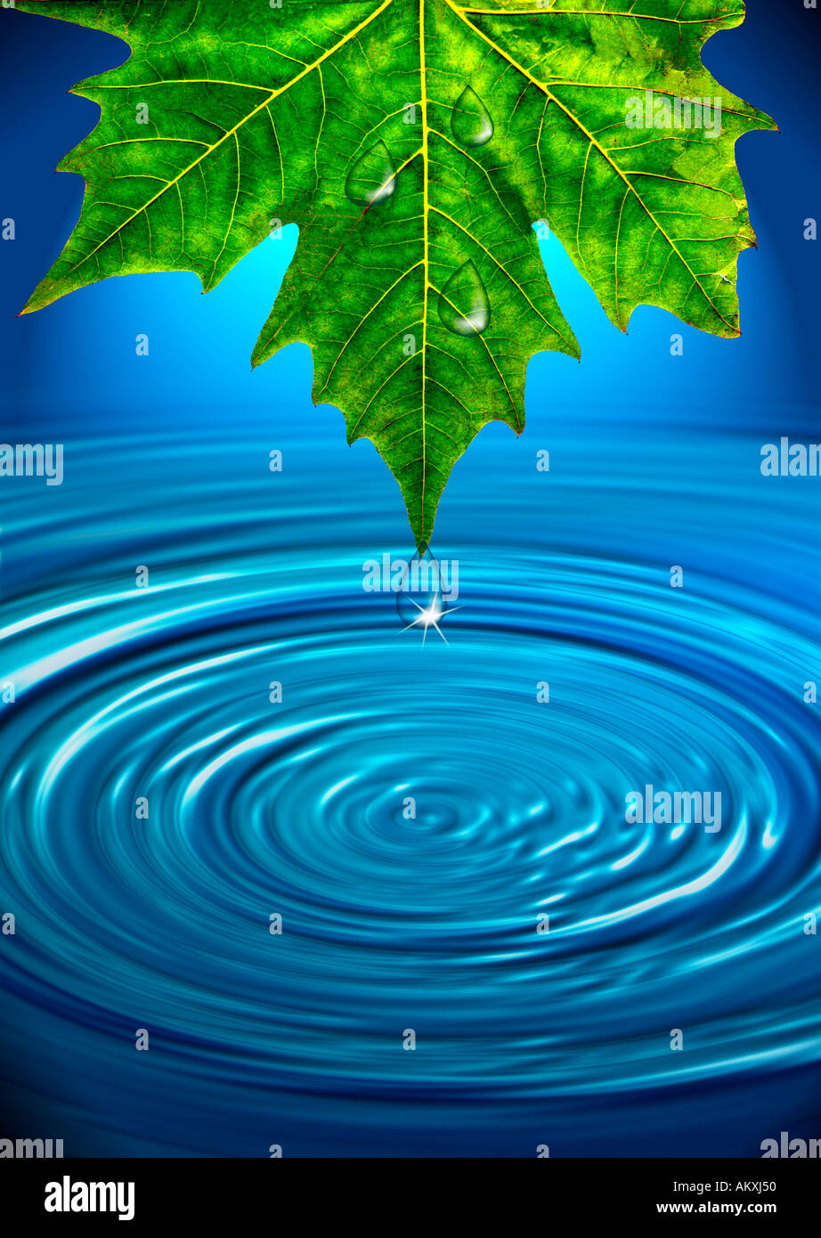 single leaf droplet of water pond water ripples rippling photo illustration concept - Stock Image