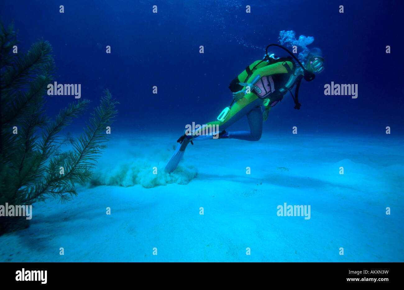 Diver carries too much lead, badly balanced, the Caribbean. - Stock Image