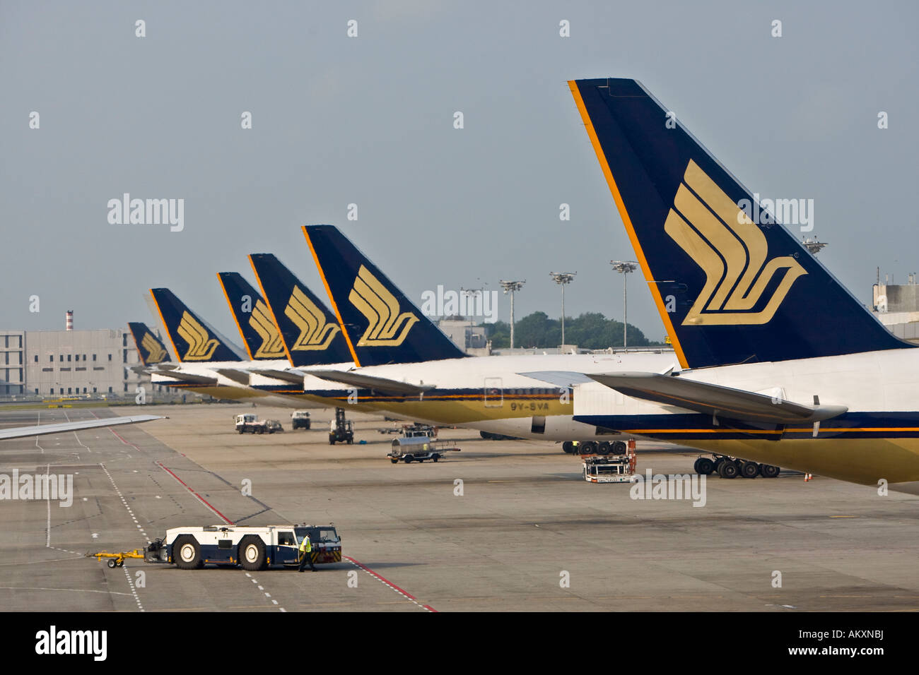 Rear fins of singapore airlines airplanes parking on the for Singapore airlines sito italiano