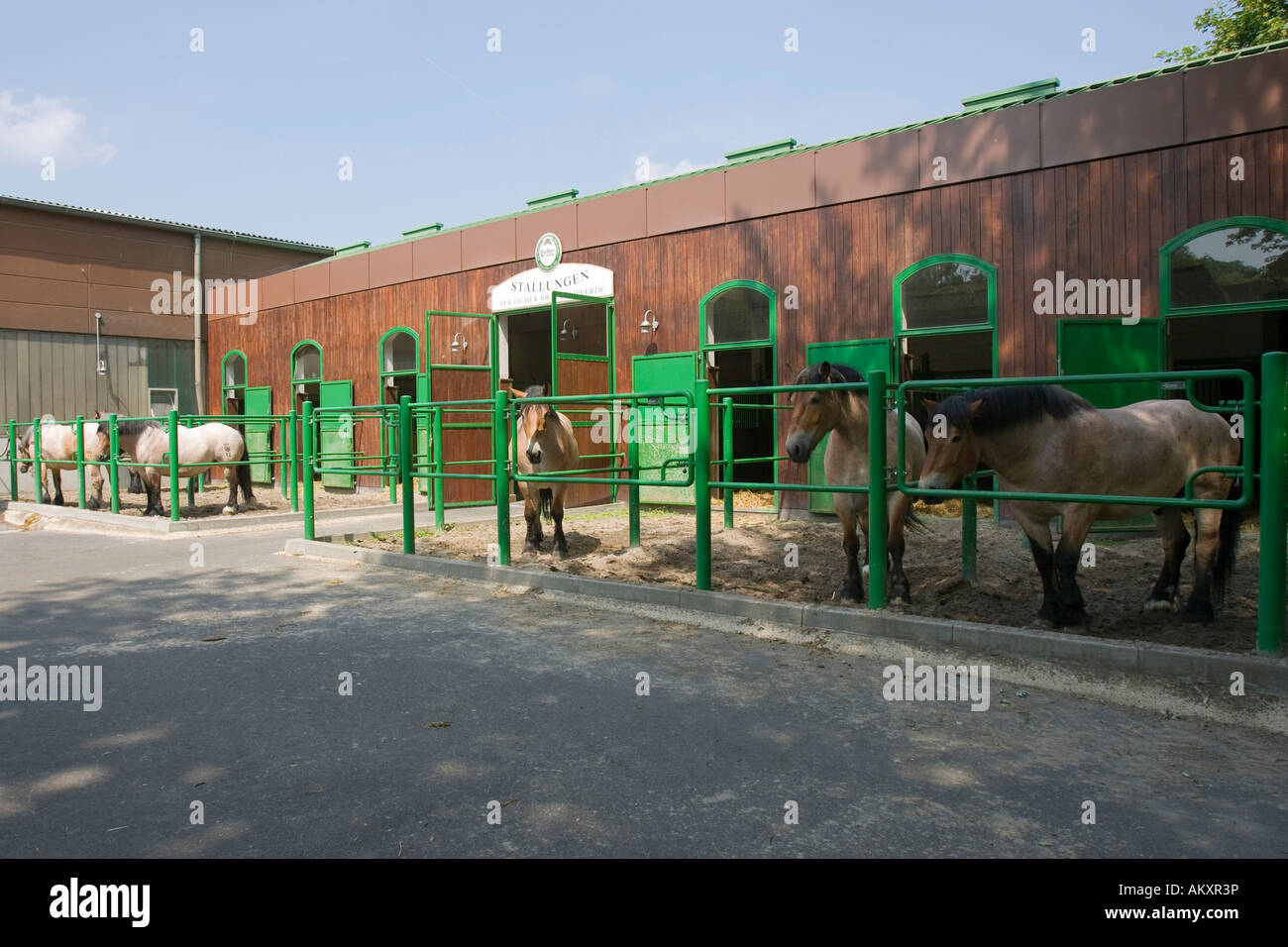 Brewery horse of the Licher brewery in the stable, Lich, Germany. - Stock Image