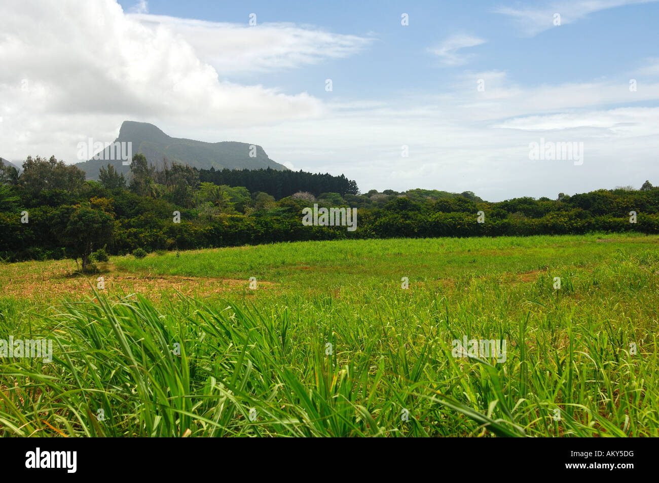 Landscape with sugar cane field, Mauritius - Stock Image