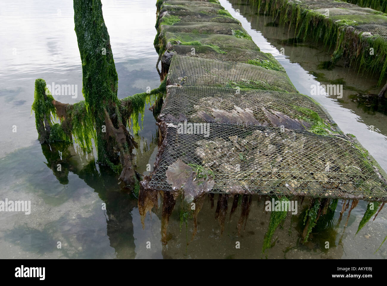 Oyster beds in the bay of Morlaix, Morlaix, Bretagne, France Stock Photo