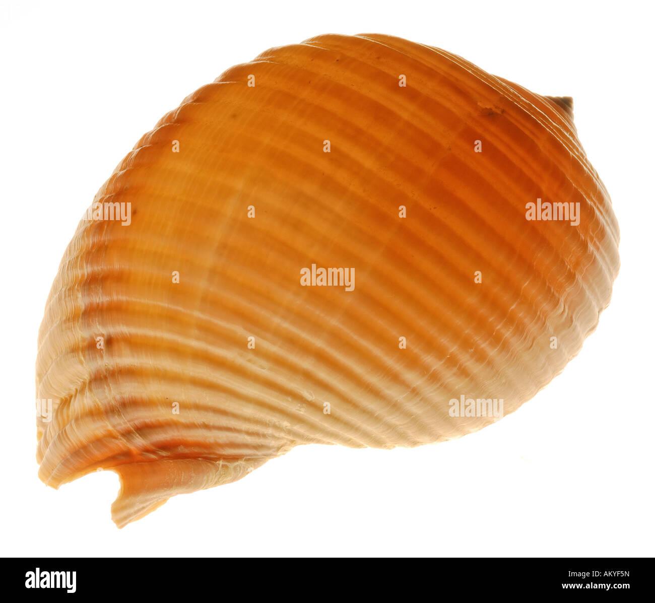 Snail-shell Stock Photo