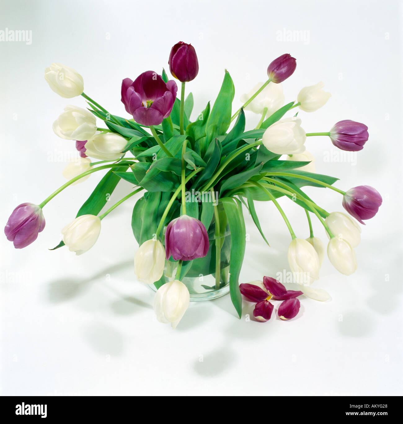 Flower arrangement white purple tulips in vase stock photo 4928551 flower arrangement white purple tulips in vase mightylinksfo