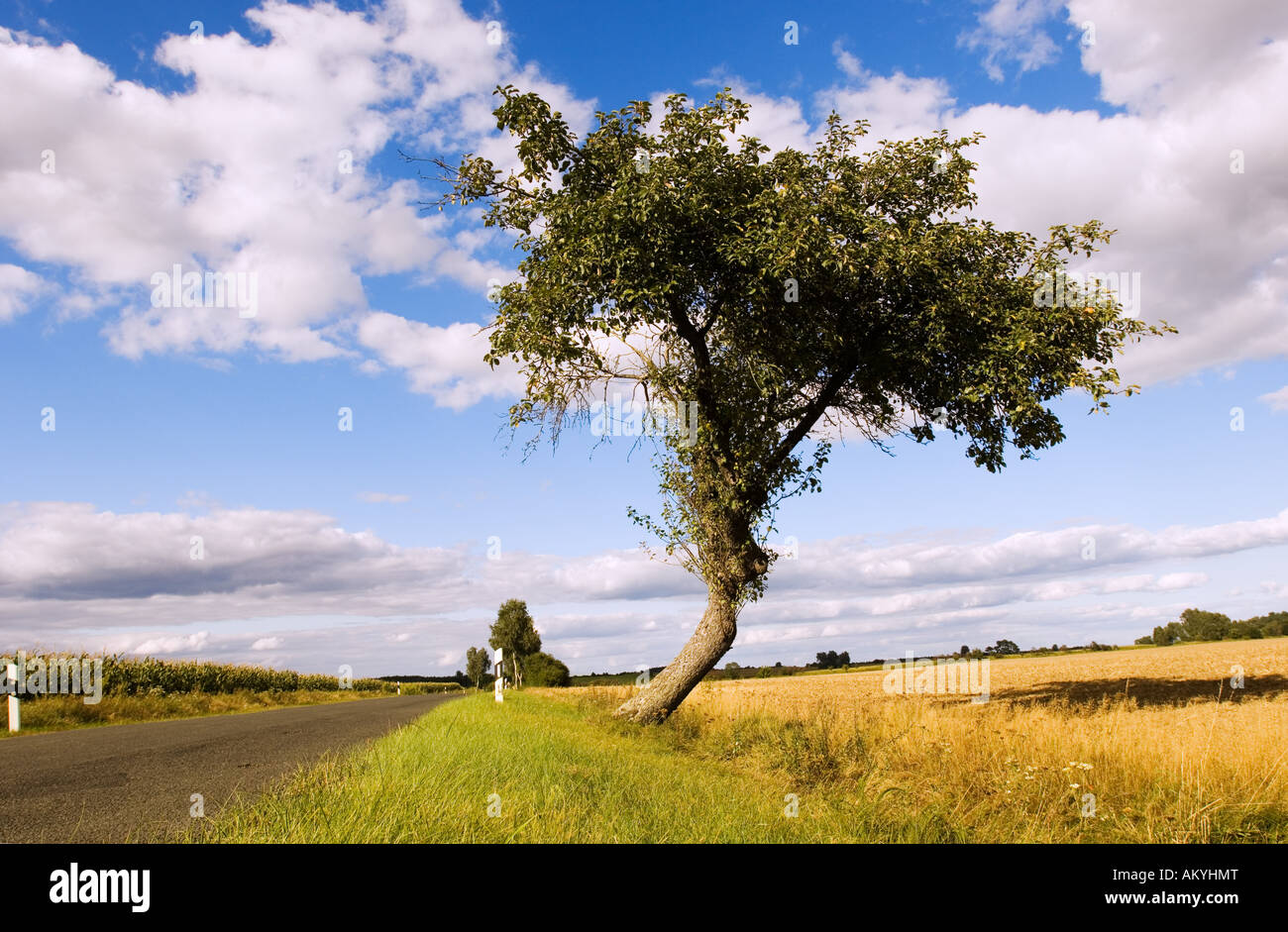 Apple tree at a highway. Road-side tree in the Flaeming, Brandenburg, Germany - Stock Image