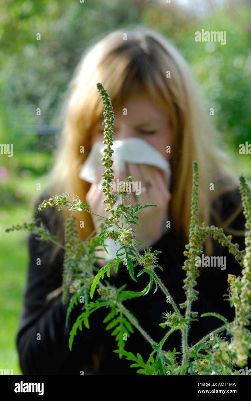 Woman reacting allergic to Ragweed Stock Photo