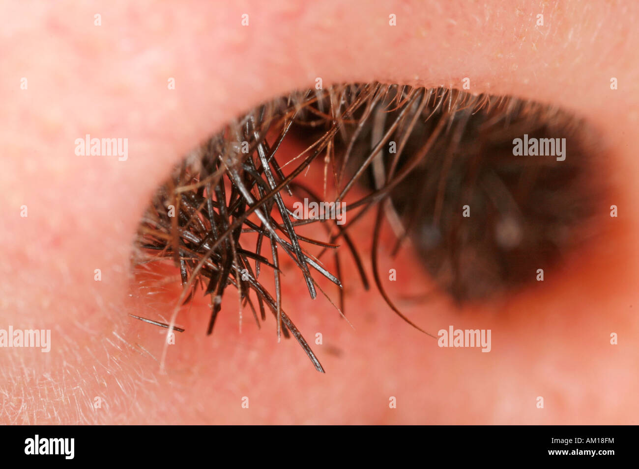 Vibrissae - hair growing out of a man's nose Stock Photo