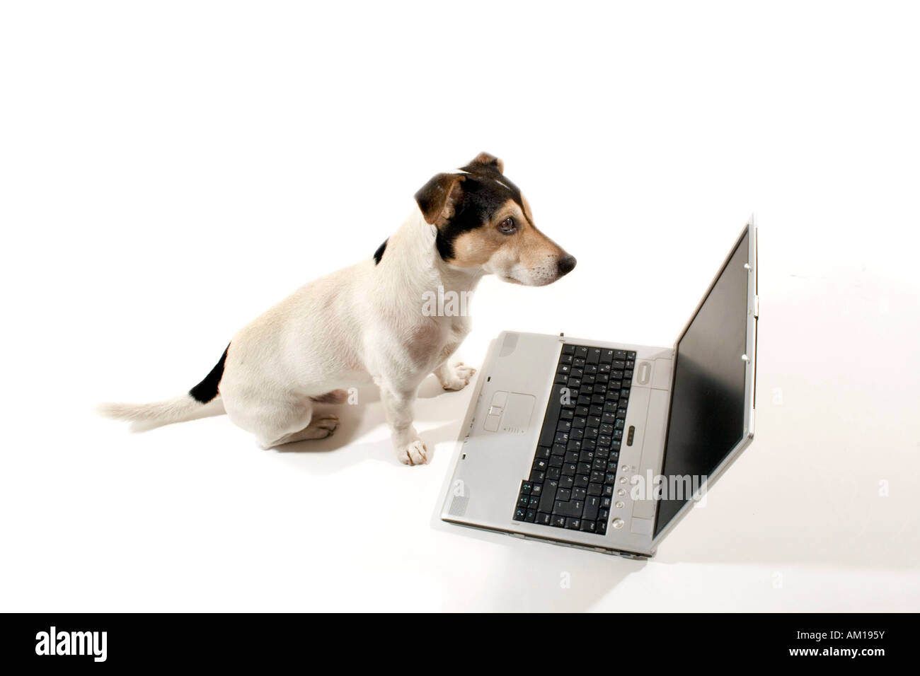 Jack Russell sitting in front of a notebook - Stock Image