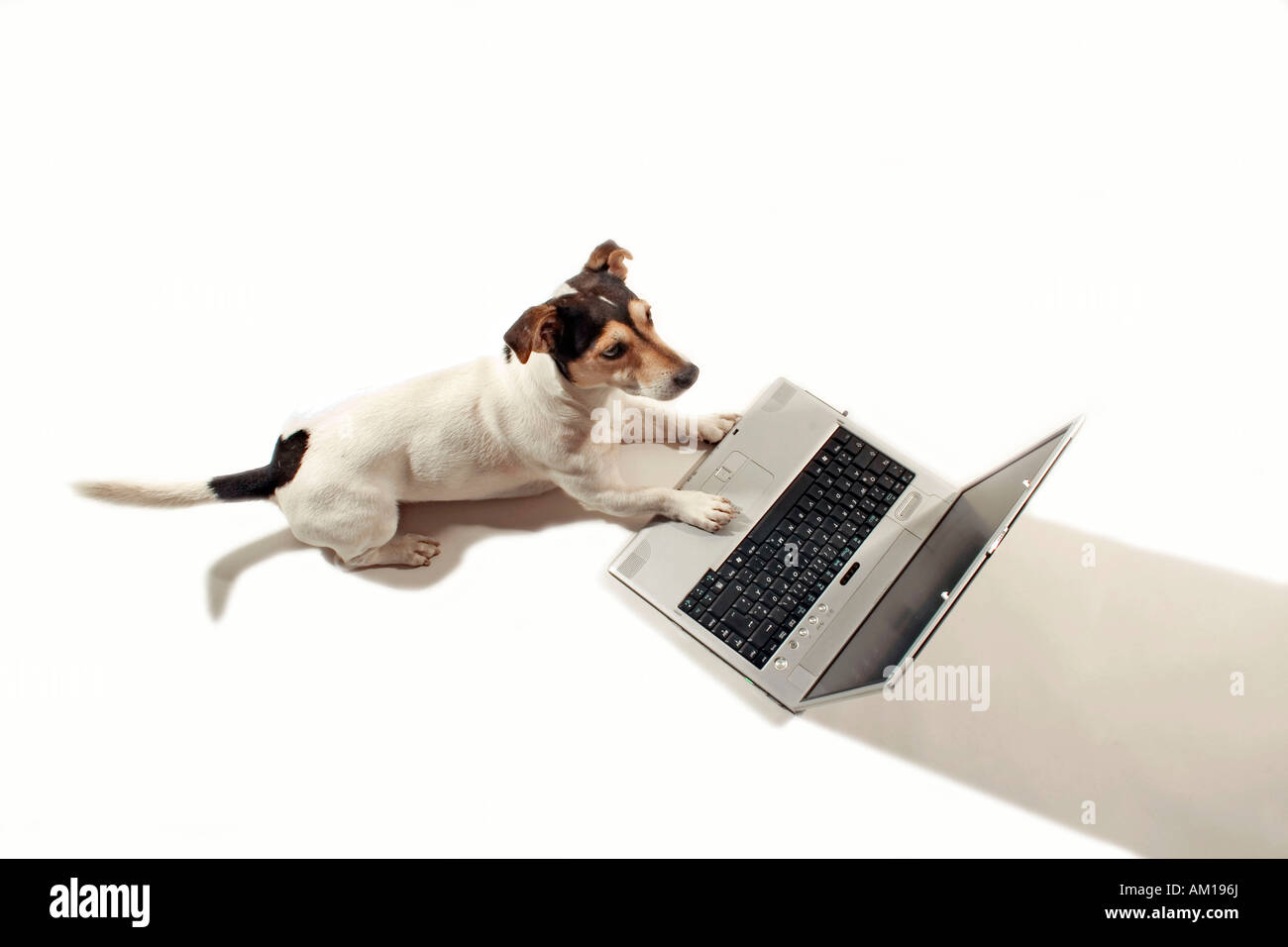 Jack Russell working on a notebook - Stock Image