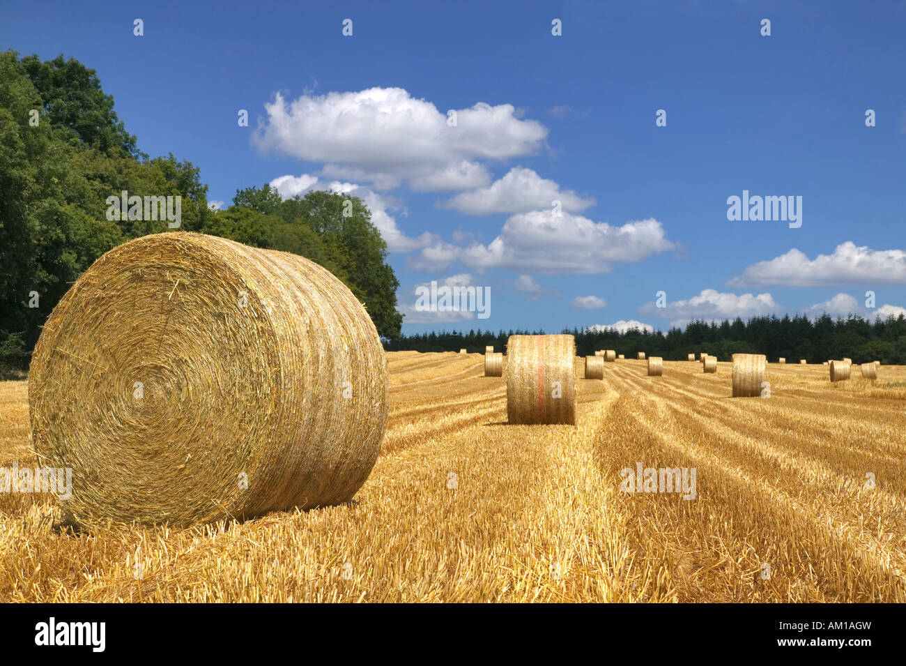 Hay bales in a field on a bright summers day - Stock Image