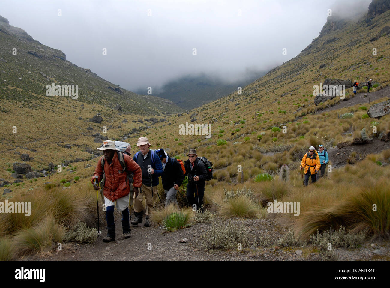 Group of trekkers with local guide on a footpath in fen landscape Mount Kenya National Park Kenya Stock Photo