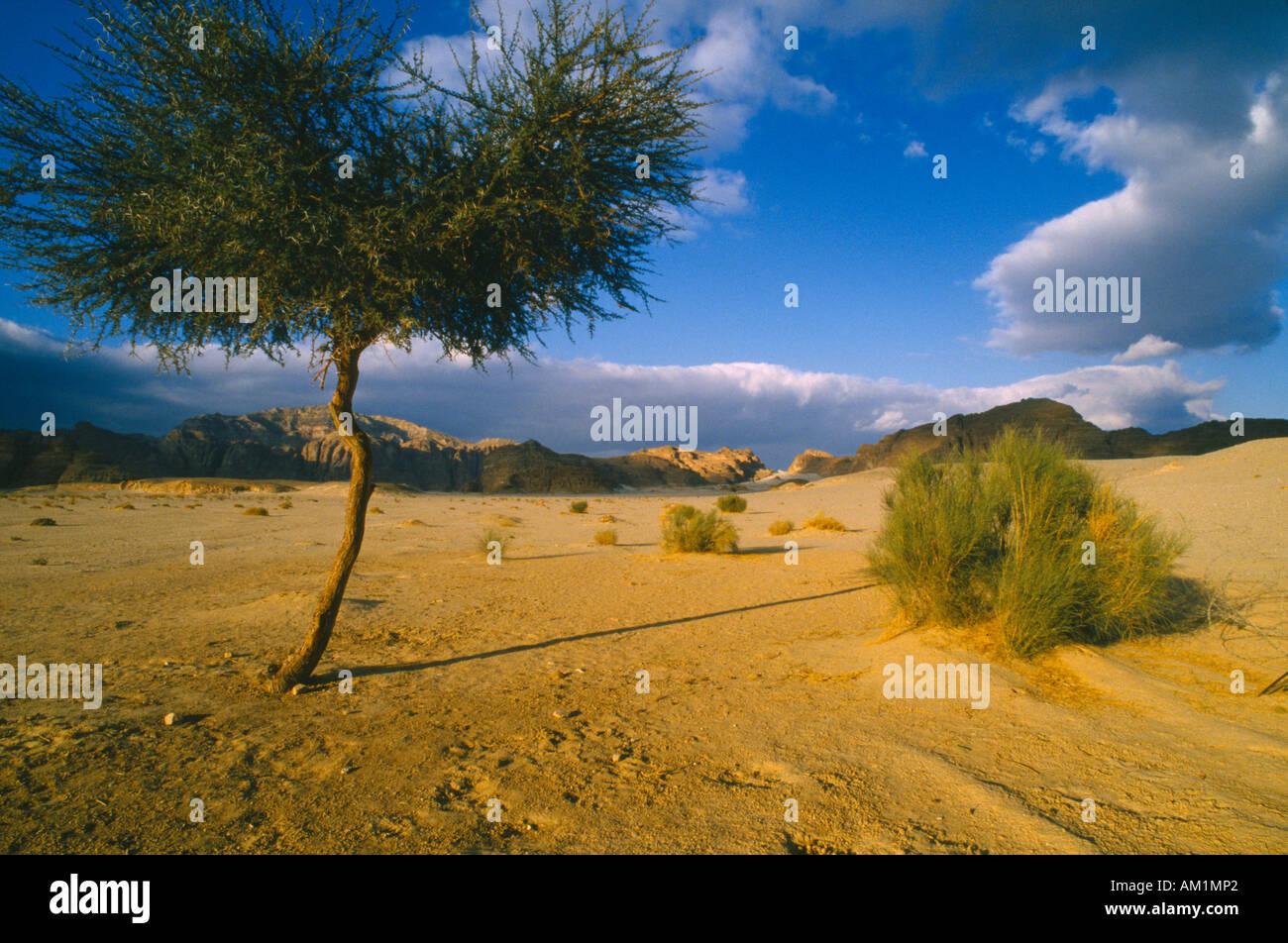 EGYPT Sinai - Stock Image