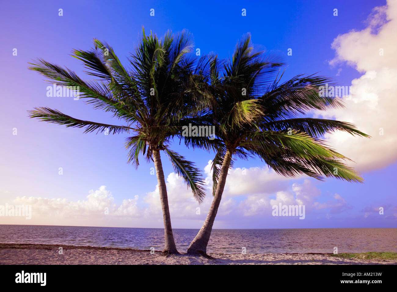 Two palm trees along beach at sunrise in Key West, Florida, USA - Stock Image