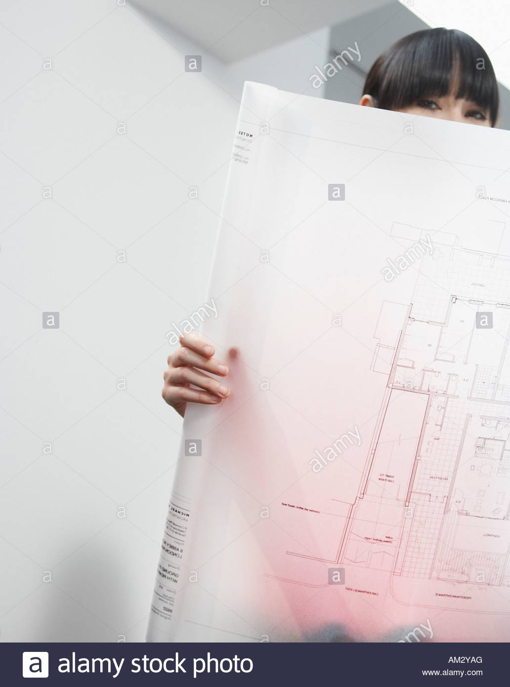 Architect looking at drafts in office - Stock Image