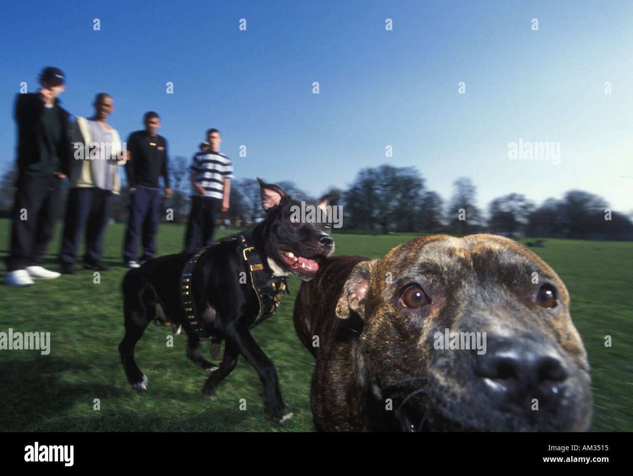 Staffordshire Pitbull Terriers and their owners in the park - Stock Image