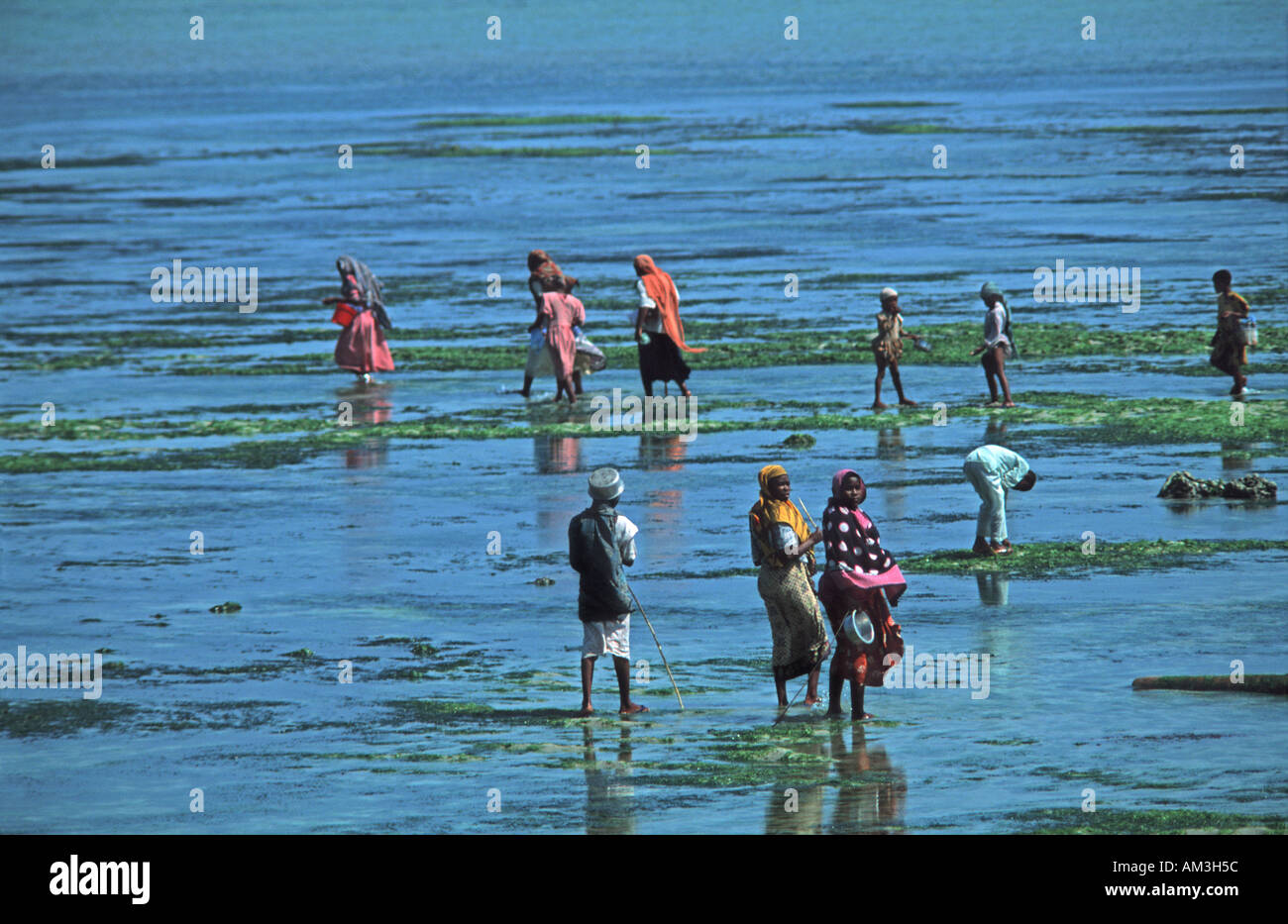 Local villagers flocking out at low tide to collect shellfish and seaweed Nungwi Unguja Zanzibar Tanzania East Africa - Stock Image
