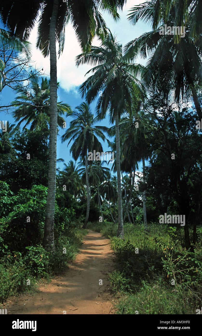 Path through the palm trees Chole island Chole lies in the Indian Ocean next to Mafia island Tanzania East Africa - Stock Image