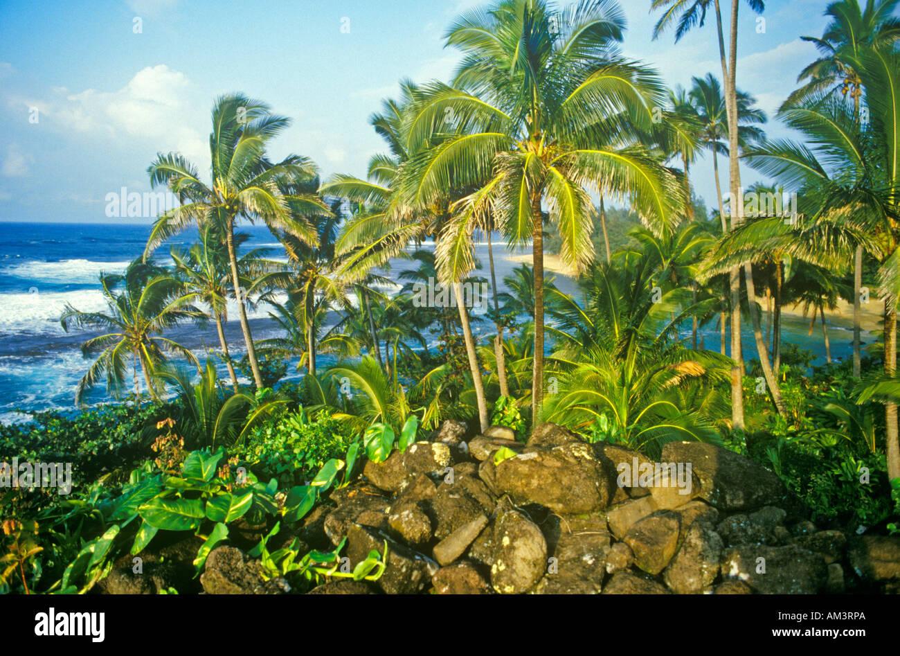 Landscape of road to Hana Maui HI Stock Photo: 8650921 - Alamy