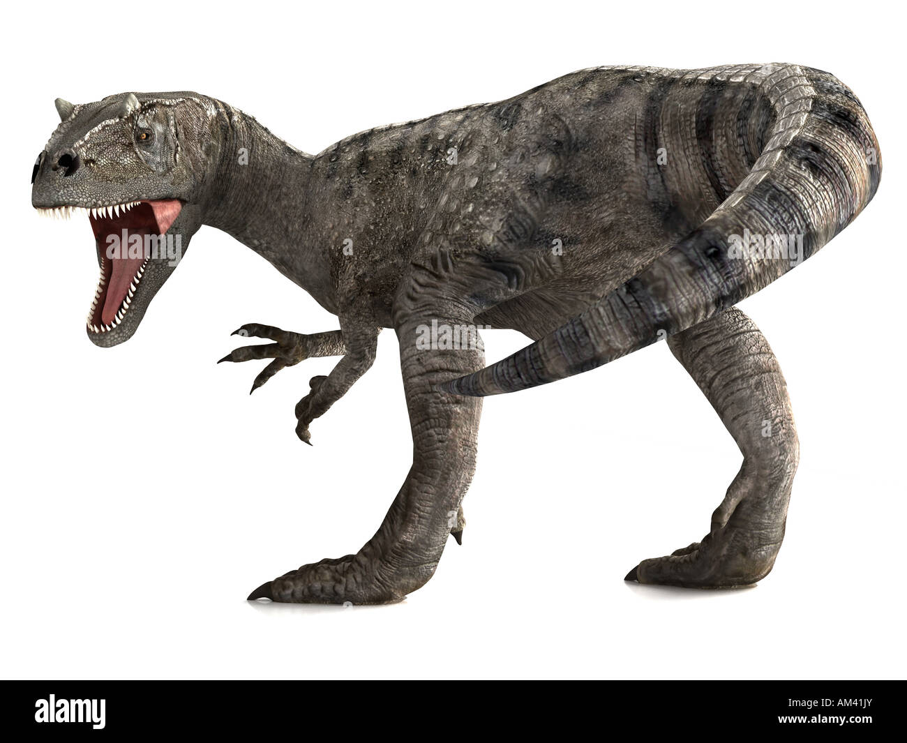 A giant dinosaur called an Allosaurus gives a roar before a violent attack - Stock Image