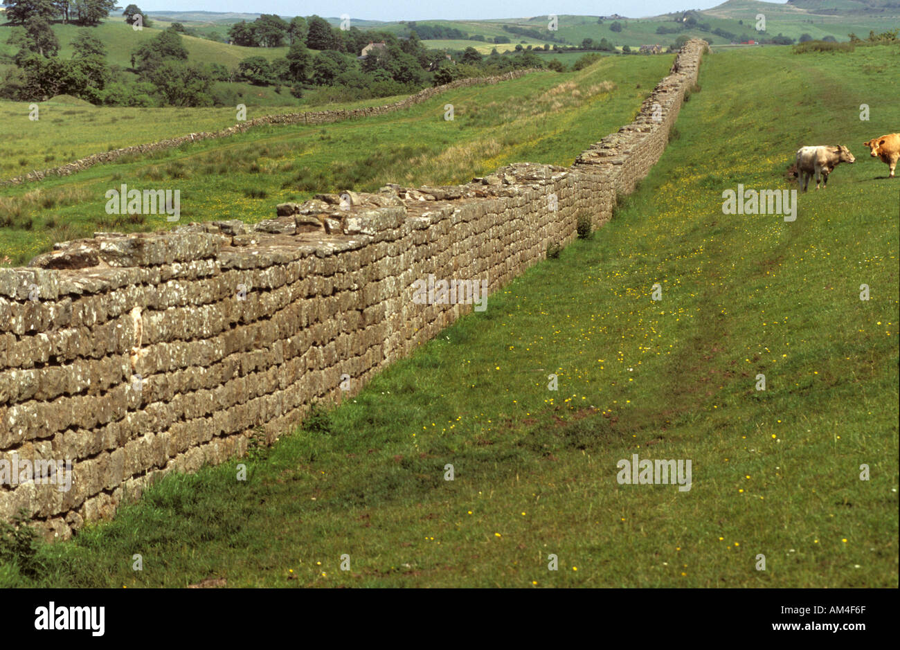 Hadrians Wall in northern England, built to prevent military raids on Roman Britain by the Pictish tribes of Scotland - Stock Image
