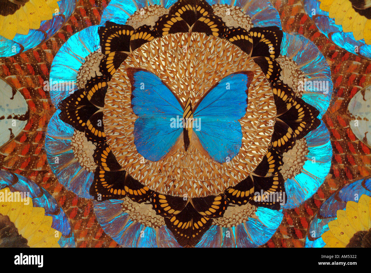 mosaic collage of colorful butterfly wings - Stock Image