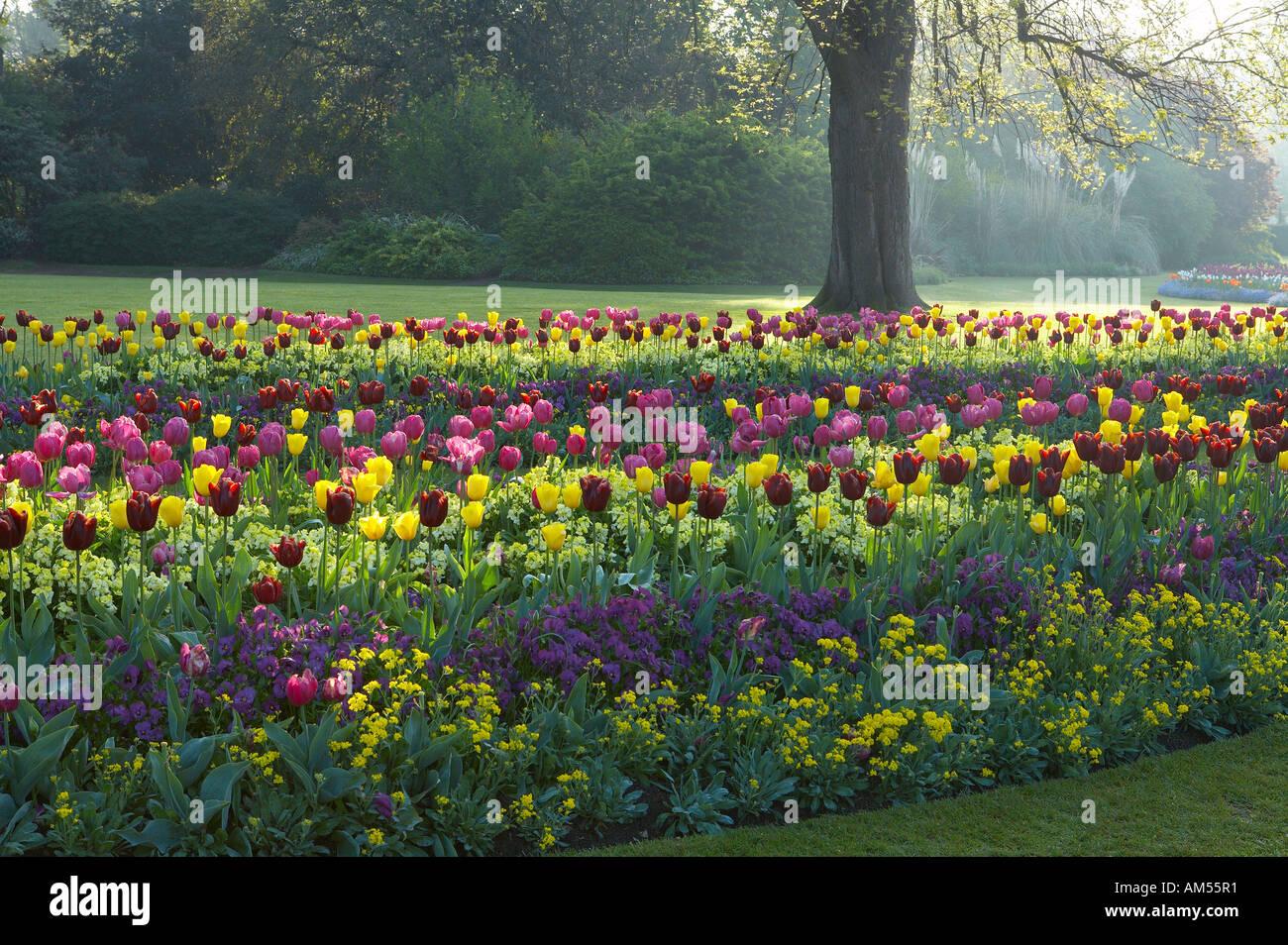 Hyde Park London Spring Flowers Stock Photos Hyde Park London