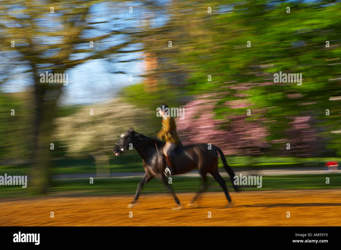 an Army officer Household Cavalry excercising his horse in Hyde Park early on a spring morning London England UK NR - Stock Image
