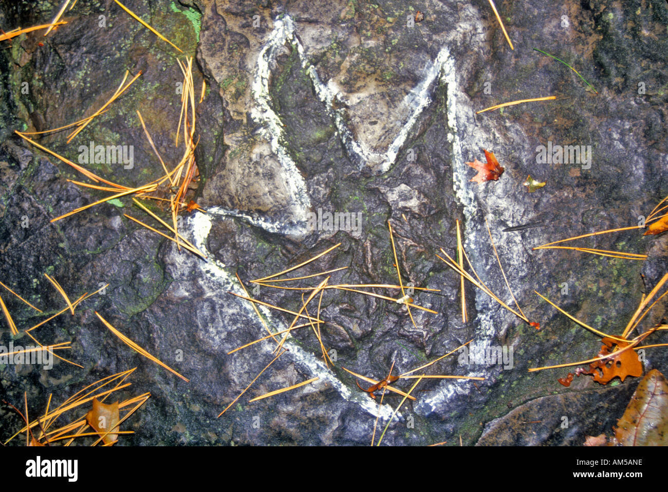 Dinosaur Footprint South Hadley Massachusetts - Stock Image
