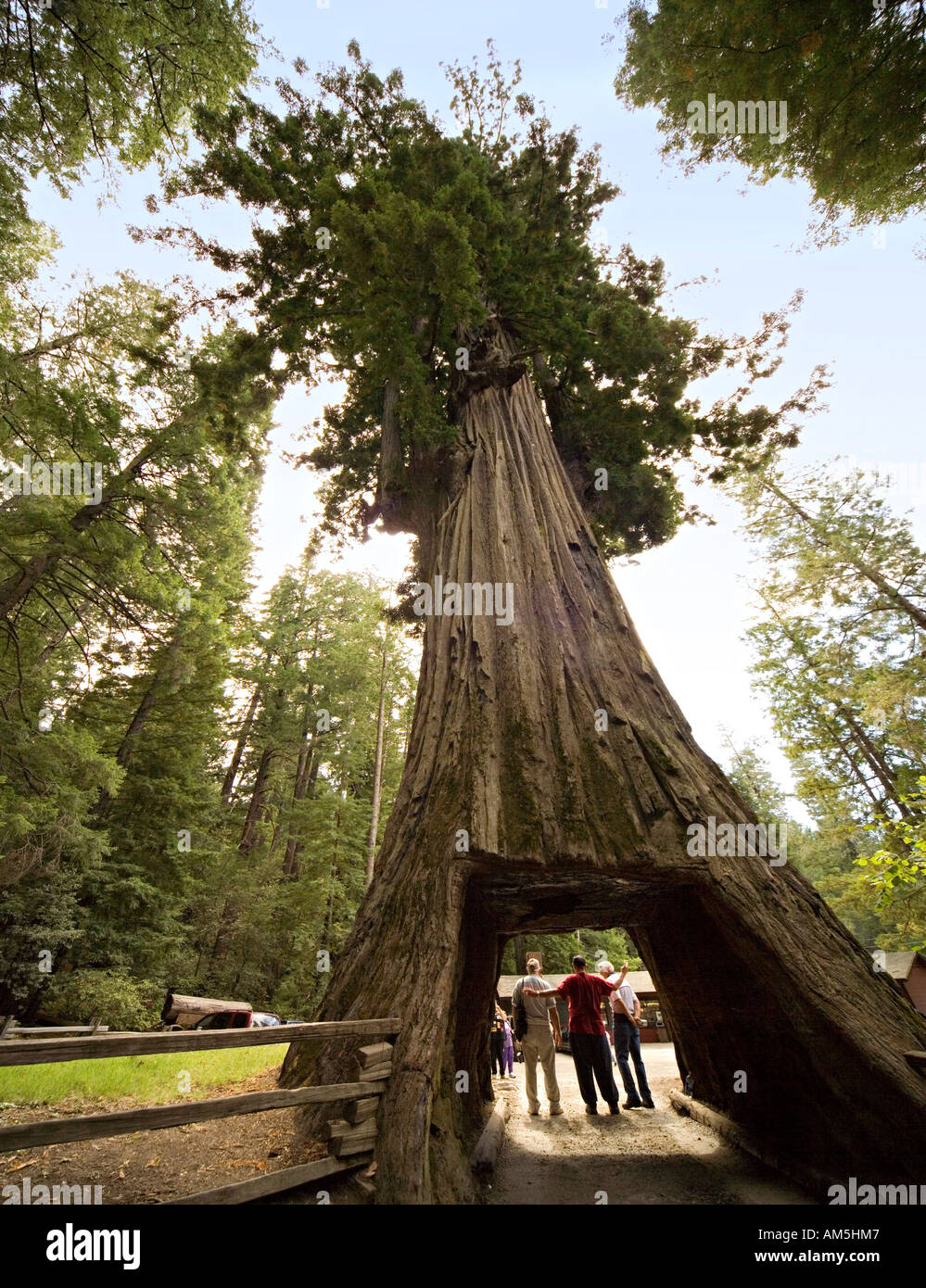 Tourists posing and taking pictures under drive thru redwood tree tourists posing and taking pictures under drive thru redwood tree roadside attraction chandelier tree leggett california arubaitofo Choice Image