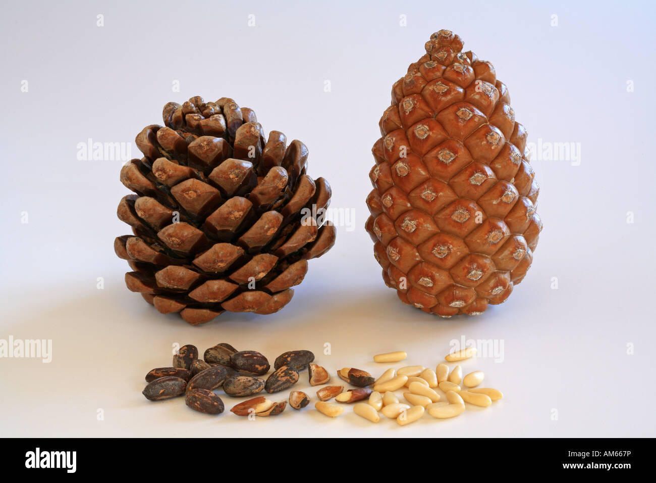 Closed and open pine cone, pine nuts with and without shell - Stock Image