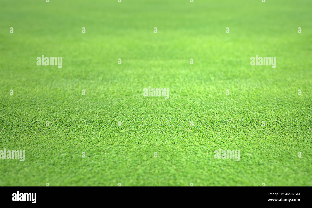 perfect flat grass from the putting green - Stock Image